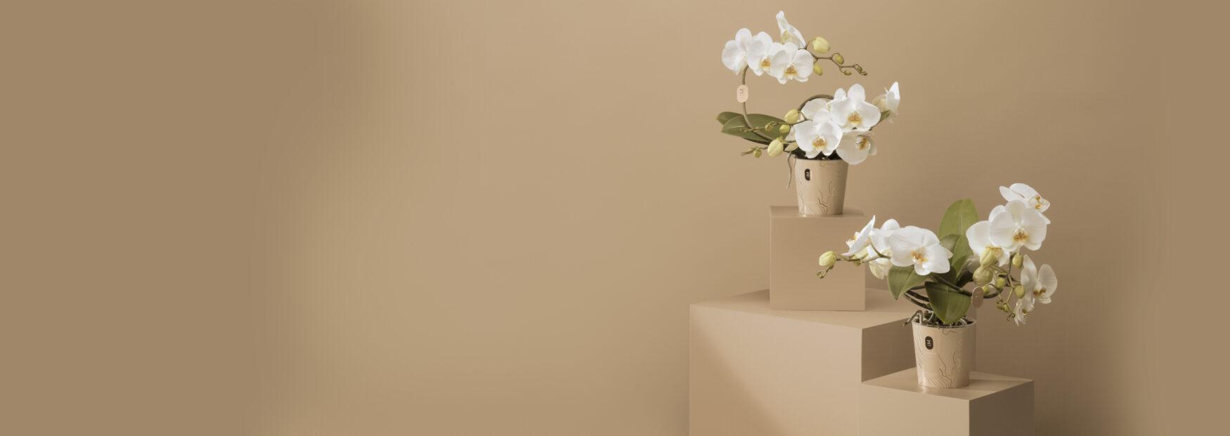 Inspirerend trouwwerk in roze van Mimesis Orchids